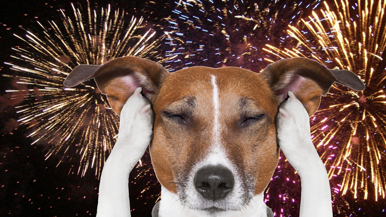 Petition · Ban the use of fireworks by private citizens in