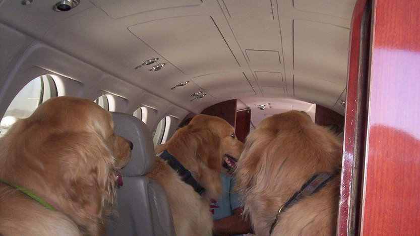 Petition american airlines airlines should allow pets for Airlines that allow dogs in cabin