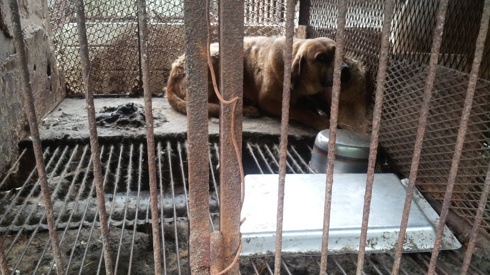 """Petition · Close down the """"Hell Hole"""" illegal dog farm ... - photo#23"""
