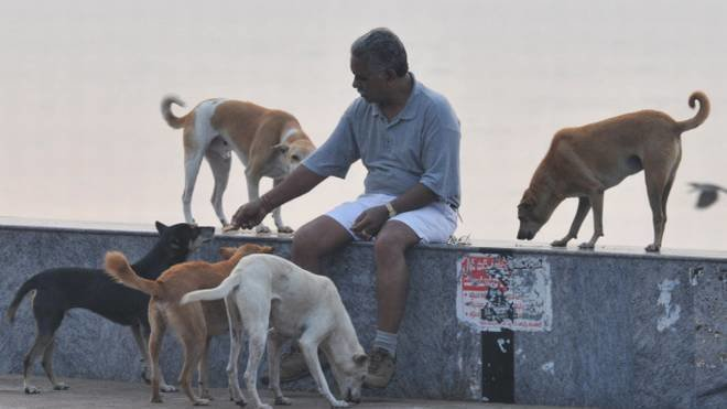 Petition · Feeding our Strays is A Constitutional Right:Stop