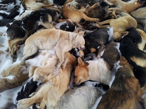 материал нитей, умерли в один день кошка и собака молодые выборе