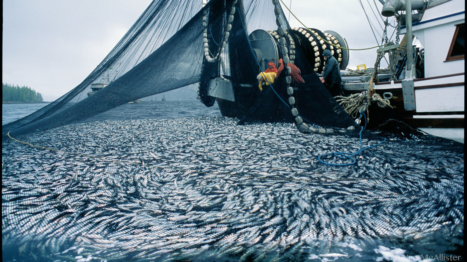 Petition protect pacific herring from dfo 39 s for What is commercial fishing