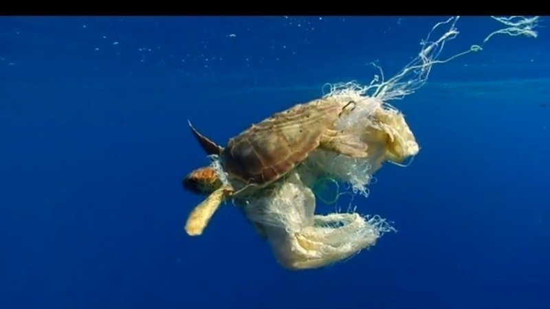 Peion California Governor Raise Awareness Of The Effects Plastic Bag Pollution On Sea Life In Long Beach Ca Change Org