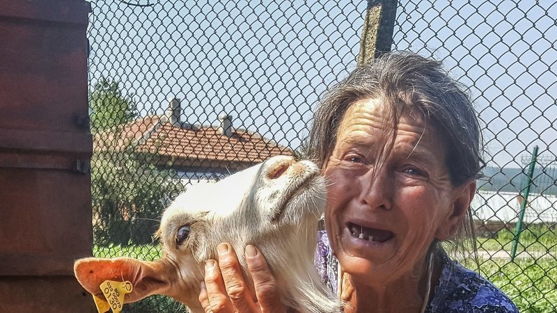 Petition · Save the healthy sheep and goats from euthanasia In
