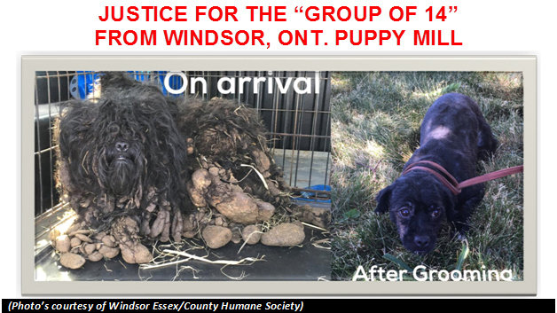 "Petition · JUSTICE FOR THE ""GROUP OF 14"