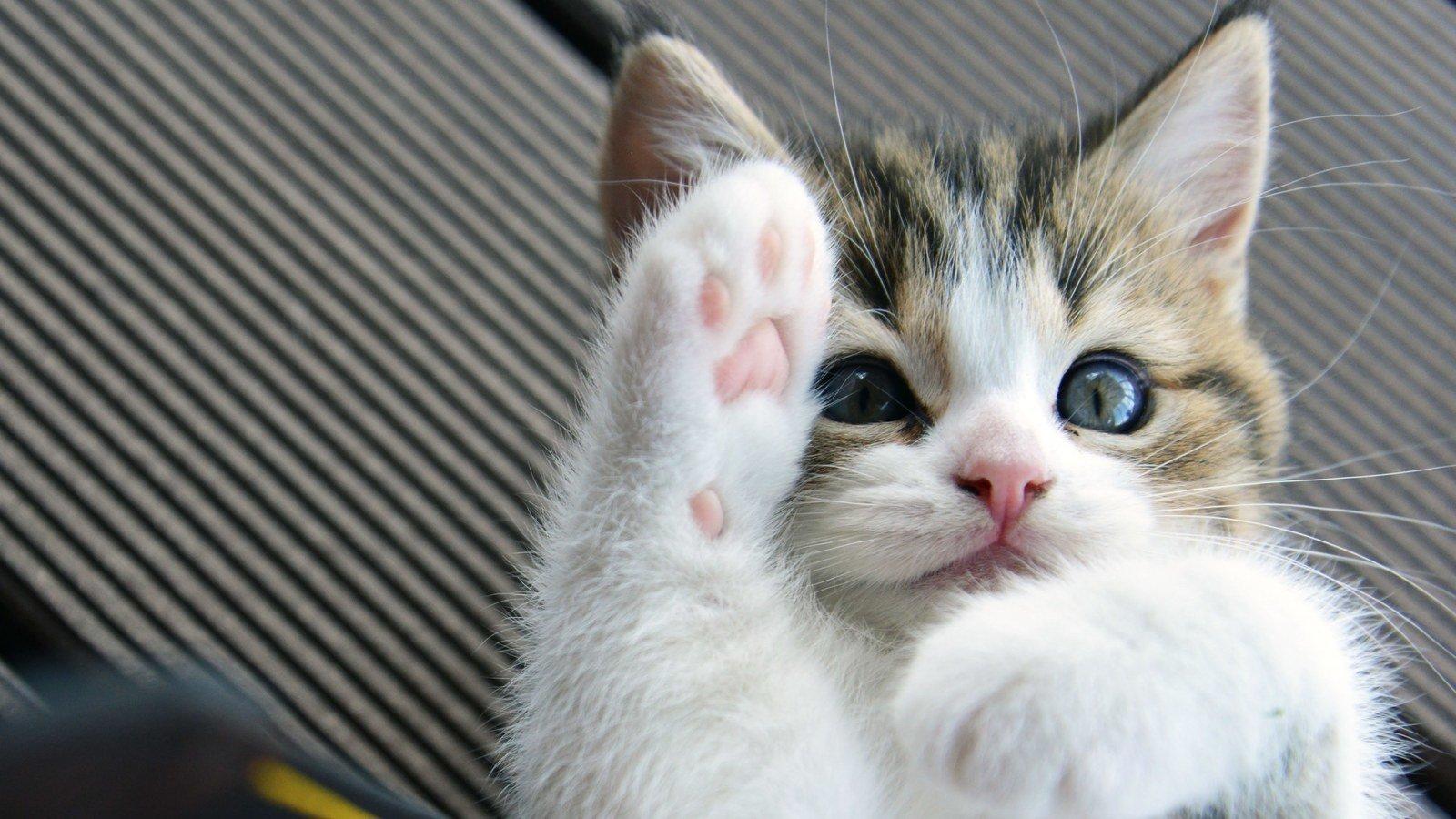 Стоит, картинки кошка с котенком прикольные