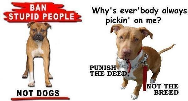Image result for pit bull ban