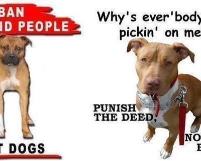 Tell Texas Not To Ban Pitbulls Say No