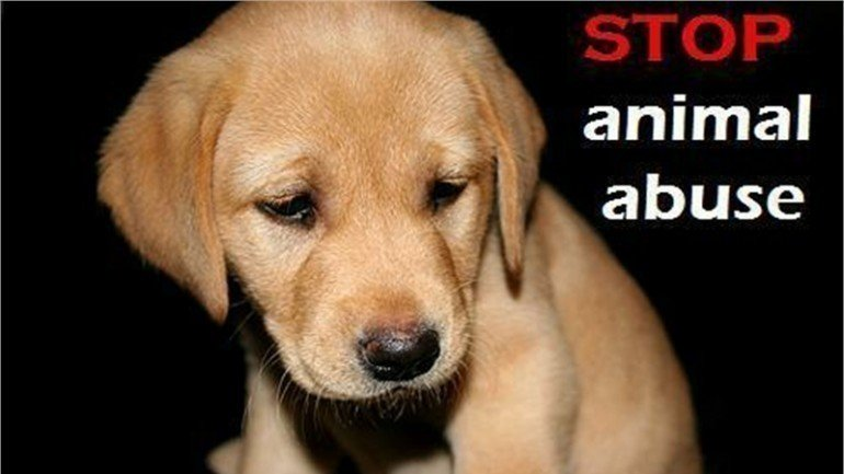 argument for stopping animal abuse Animal testing an animal test is any scientific experiment or test in which a live animal is forced to undergo something that is likely to cause them pain animal experiments are not the same as taking your companion animal to the vet animals used in laboratories are deliberately harmed, not for their.