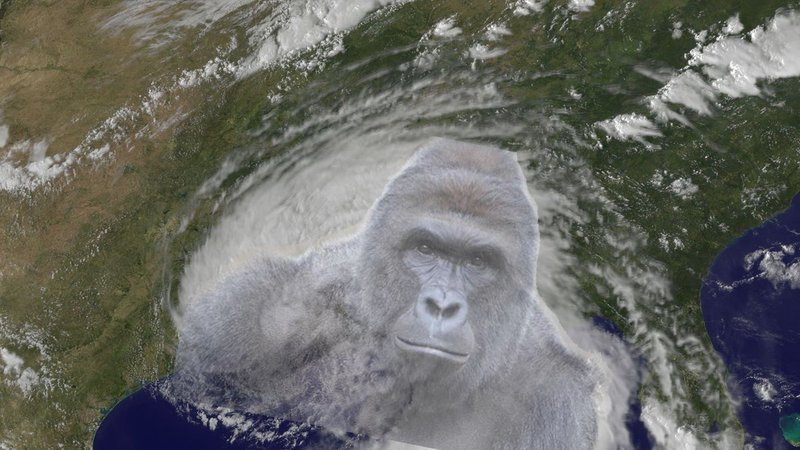 OSLBIcRmnOMkgbg 800x450 noPad?1471814776 petition · atrocity change tropical storm hermine to tropical storm