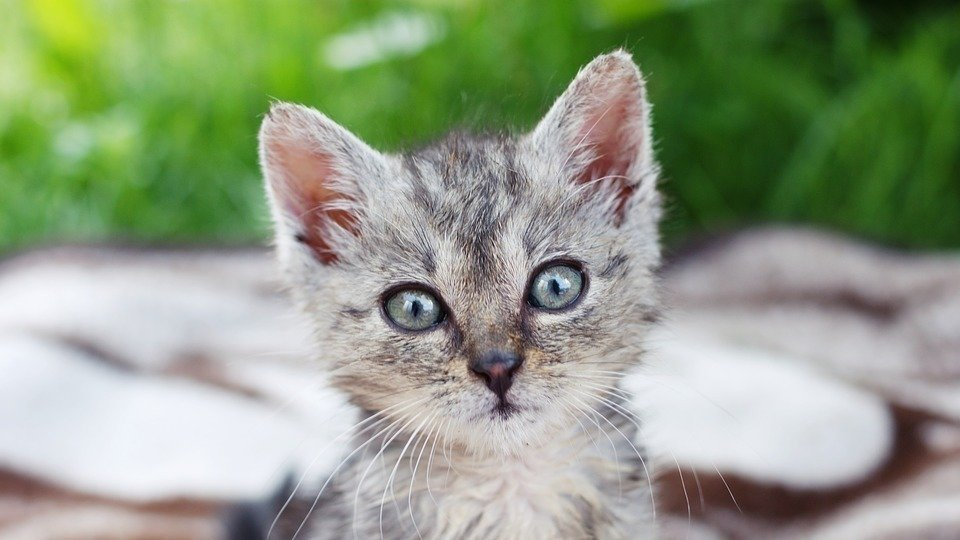 Petition · Sign: Justice for Dead Kitten Hurled from ...