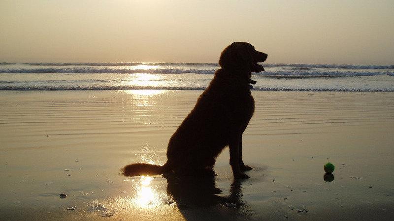 Petición Ayuntamiento De Liendo Y Gobierno De Cantabria La Playa De Sonabia Nudista Y Que Los Perros Esten Permitidos Sin Restricciones Horarias Change Org