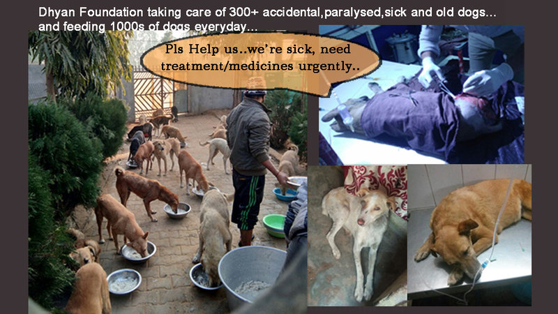 Petition update · RESCUED DOGS SUFFERING FROM CRITICAL