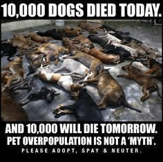 Can A Dog Die From A Spay