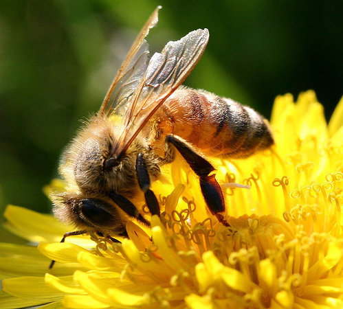 how to kill honey bees in house