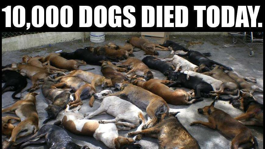 Stop Breeding Dogs Petition