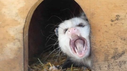 Petition · Make a screaming opossum emoji · Change org