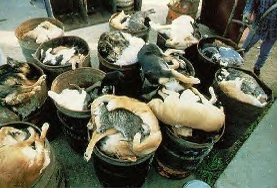 Petition · Stop the unnecessary over breeding of dogs and cats · Change.org