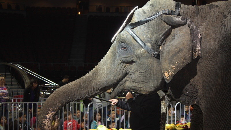 Elephant, Change.org