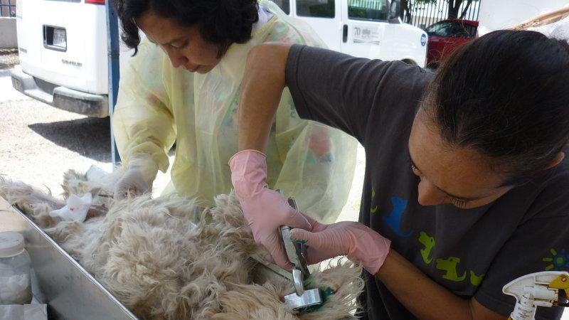 Petición Secretaría De Salud Identificación De Perros Y Gatos