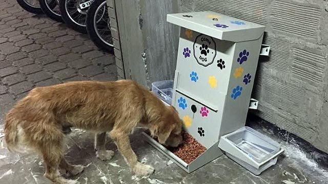 Petici n presidente de la naci n mauricio macri for Dispensador de comida para perros