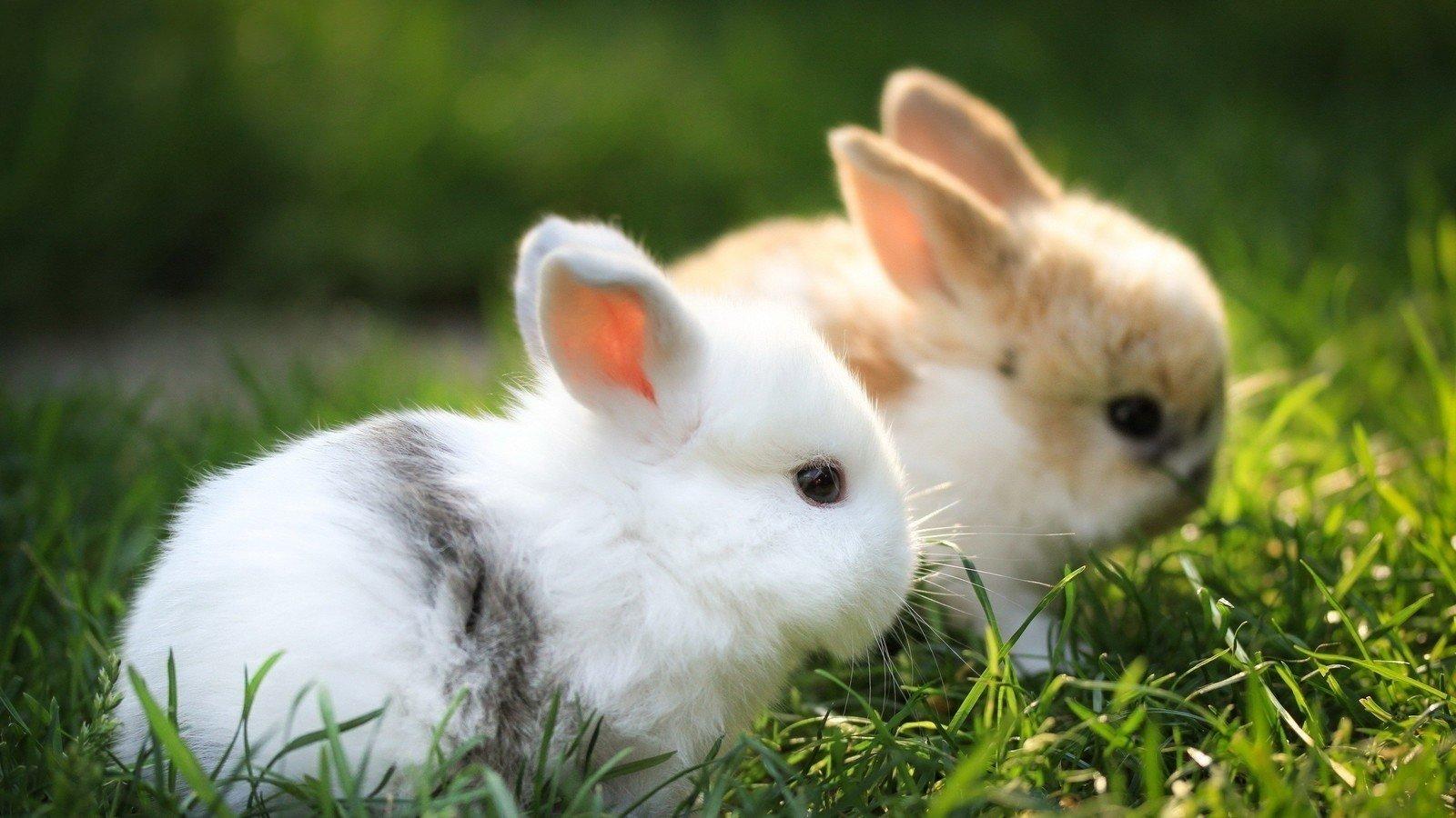 topic animal testing change org