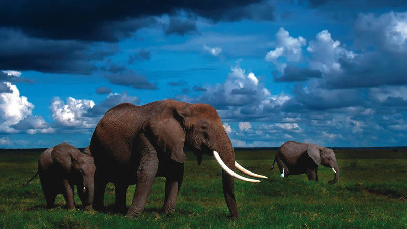 Petition Stop Using The Martircharical Elephant As A Republican