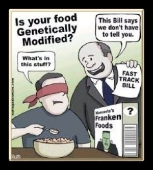 GMO foods were never approved by the FDA, True or False? - Biggies ...