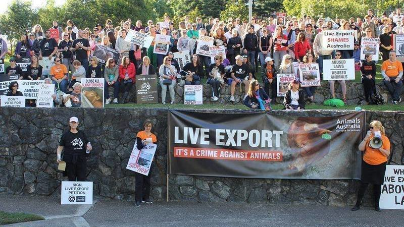 ban live export How is the live export trade regulated article id: 107  the live export industry is in the process of developing a quality assurance program referred to.