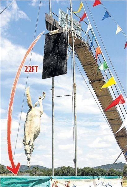 Petition 183 Stop The Mule High Diving Show 183 Change Org