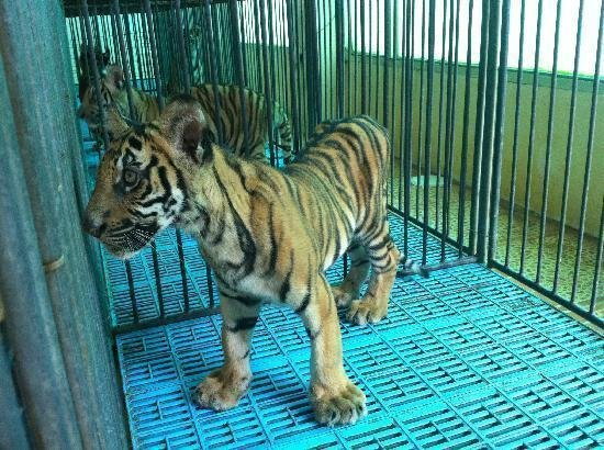 Petition 183 Give Animals The Life That They Deserve