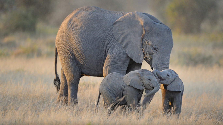 Petition president mokgweetsi masisi save botswana - Fotos de elefantes bebes ...