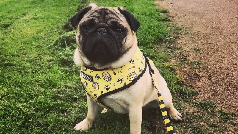 Petition Make It A Legal Requirement For Pug Breeders To Test