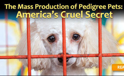 Petition Everything Pets And Supplies Stop Breeding And Selling