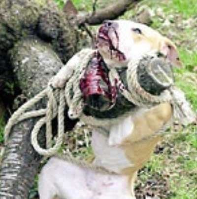 Petition 183 Michael Vick S Abuse Of Animals 183 Change Org