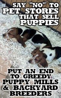 Petition · Ban the Retail Sale of Puppies in Suffolk County