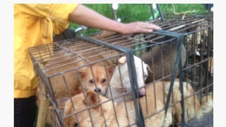 Yulin Dog Meat Festival 2020.Petition Boycott Products Made In China Stop Yulin Dog