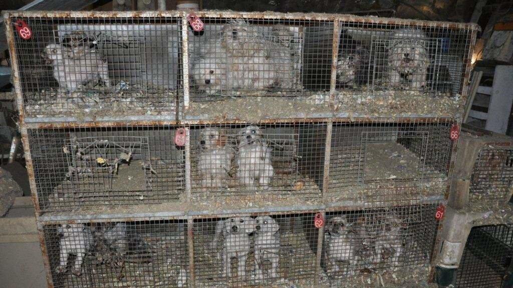 Petition 183 Facebook Facebook Ban Puppy Mills And Backyard