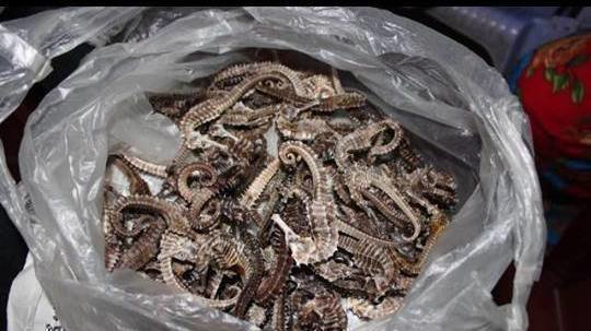 Petition · Stop the sale of real seahorses on Etsy · Change org