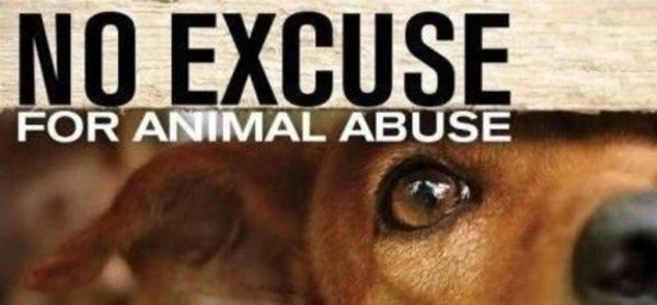 animal cruelty physical abuse of animal On behalf of the massachusetts animal cruelty task force, i am pleased to  present  animals to ensure that perpetrators like puppy doe's alleged abuser ( and.