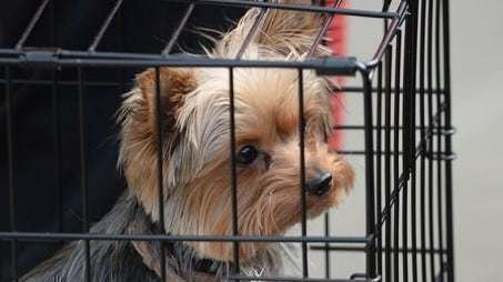 Petition update · Amber Heard's fate has gone to the dogs ...