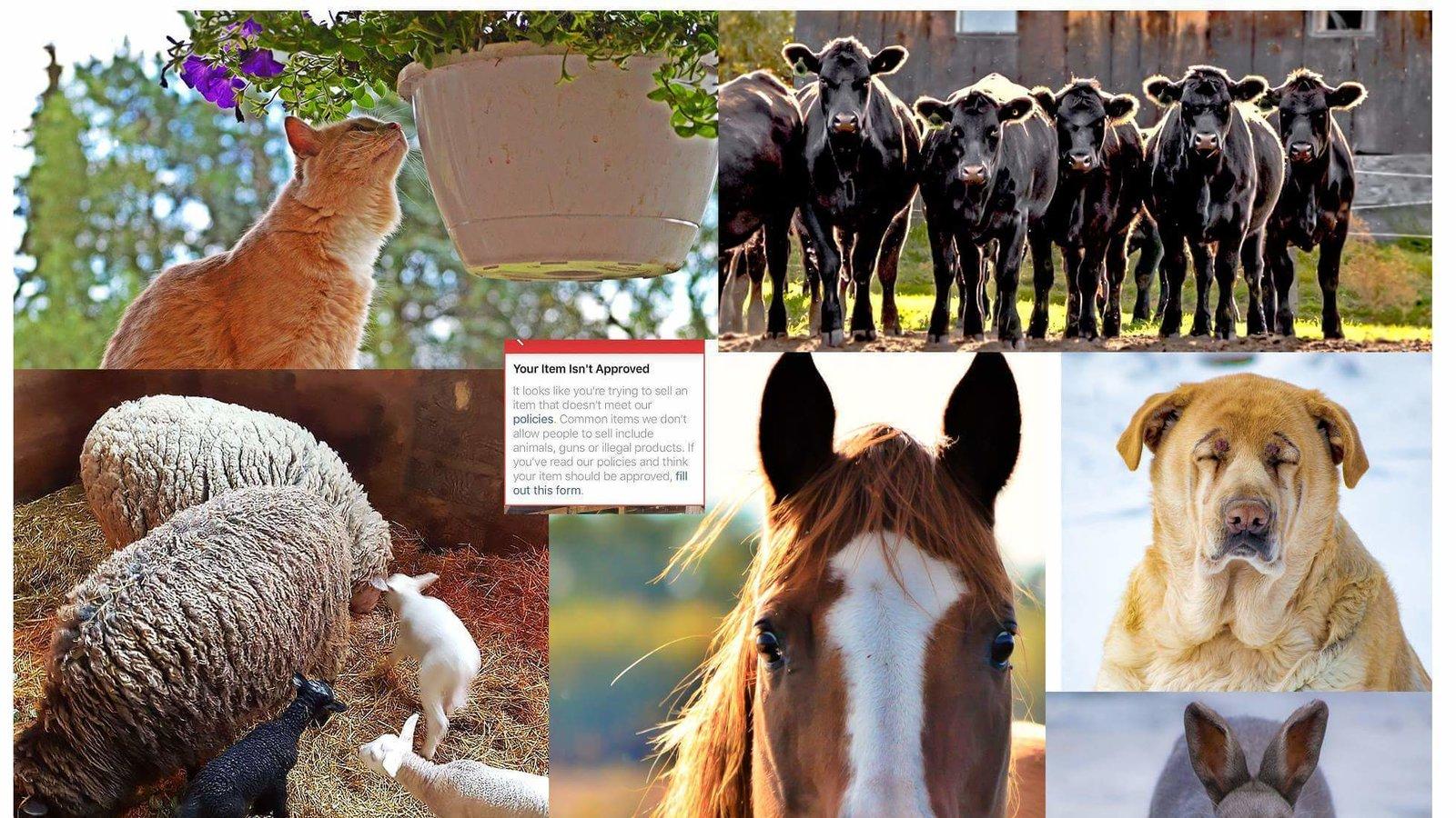 animal banning 优质解答 many (me-ni) any(e-ni) banning(ban-ning) animal(a-ni-mal) 总之捏,就是, 辅音一定要有元音才能成为一个音节, 元音可以单独成为一个音节,也可以与.
