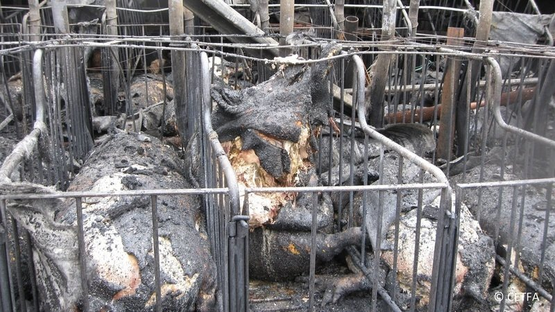 Protect Animals From Barn Fires