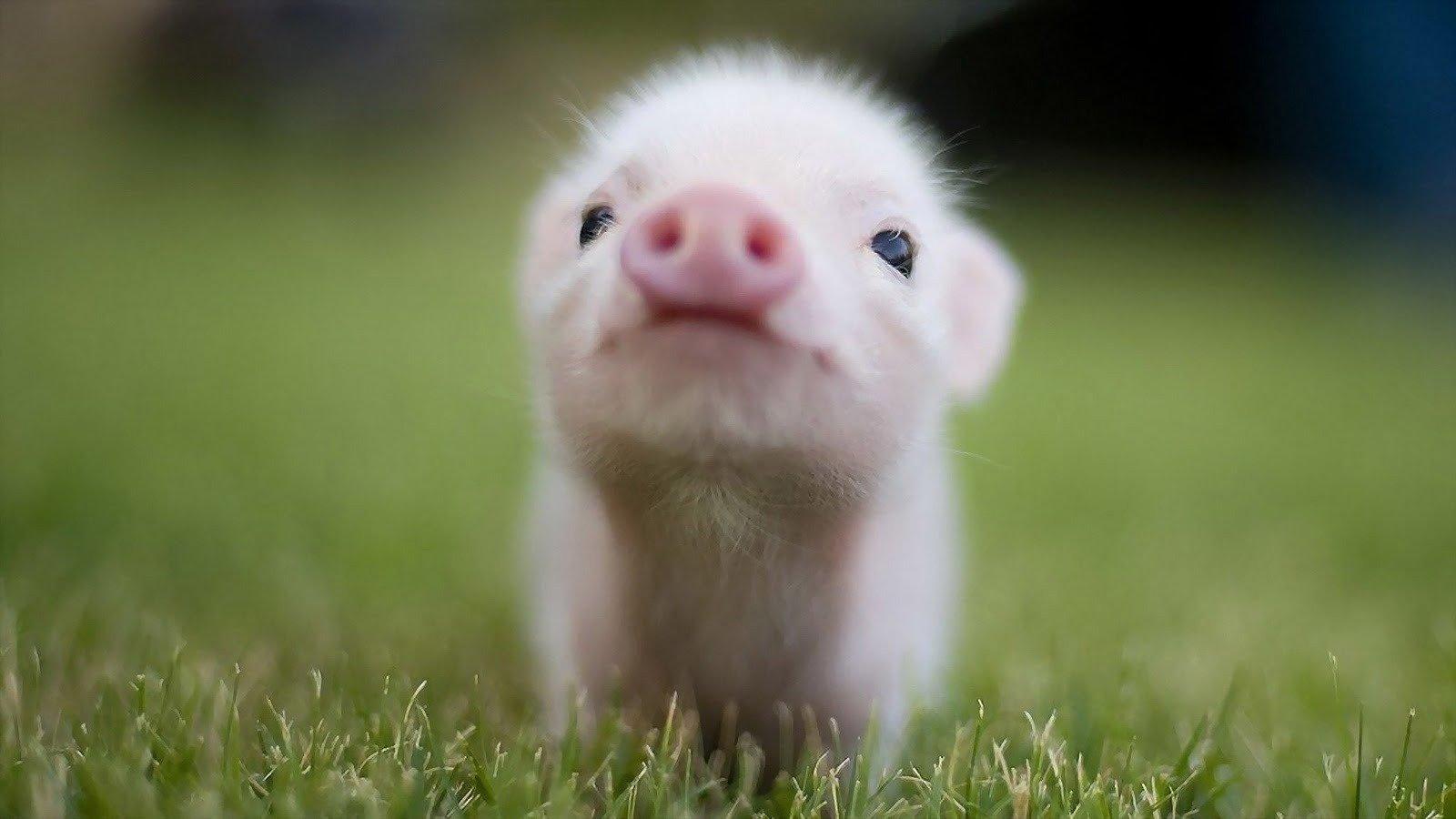 Petition · Saratoga County NY Fair: STOP animal cruelty ...