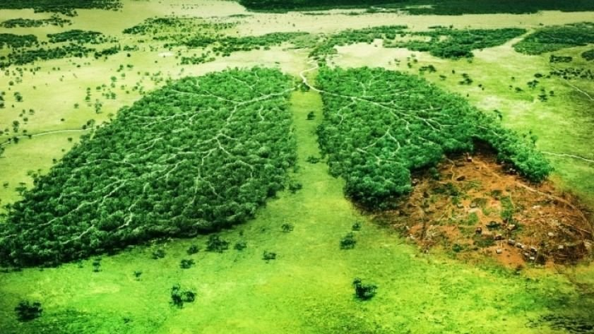 topic save forest change org