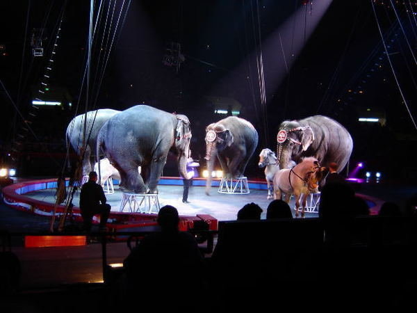 Petition · Tell the Shrine Circus: Stop Using Performing ...