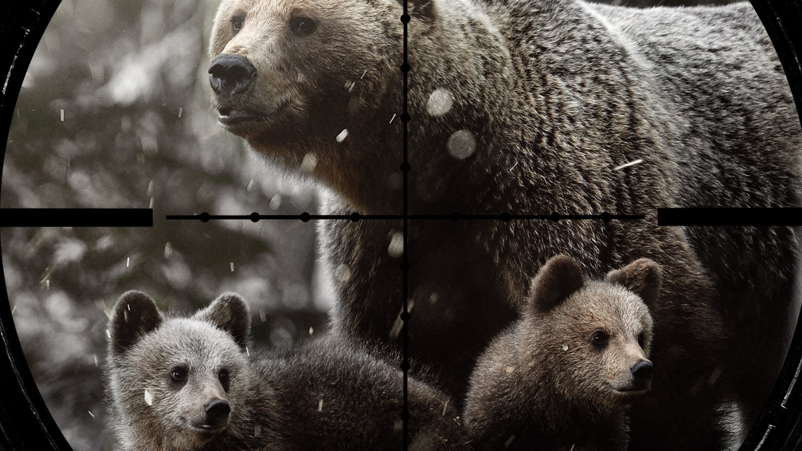 Kristy Tibbles kristy.tibbles@alaska.gov Executive Director, Board of Game: I object to the Exception 1 and 2 in 5 AAC 92.260 which allows for the taking of bear cubs and female bears with cubs.
