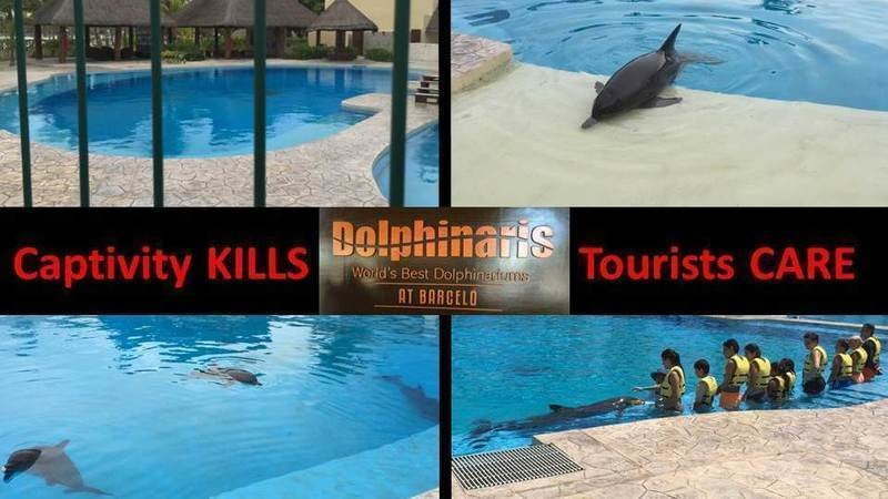 Stop Dolphin Swimming Programs In Dolphinaris At Barceló Maya Beach Resort Mexico