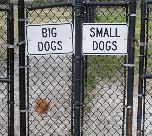 Fenced Dog Parks Wollongong