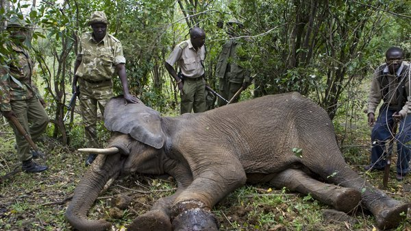 how to help stop elephant poaching